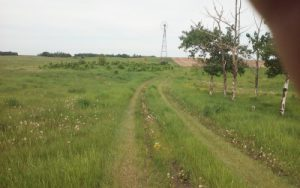 June 2017 Looking West up the pathway to the Dick & Hulda Humbke farm at Haultain, Wetaskiwin, AB